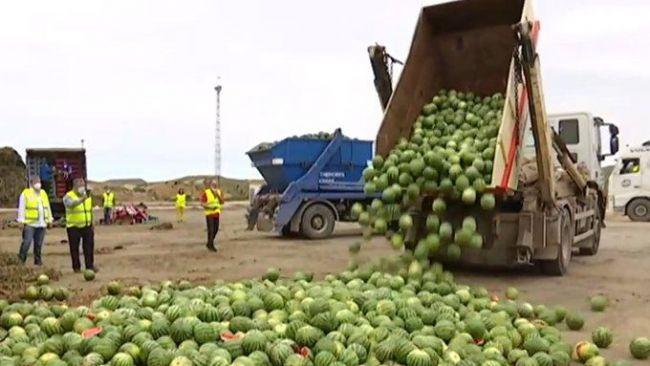 Asaja calcula 75 millones de euros en pérdidas por la crisis de precios de sandía y melón