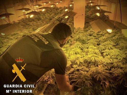 La Guardia Civil interviene 548 plantas de marihuana y neutraliza 29 enganches ilegales.