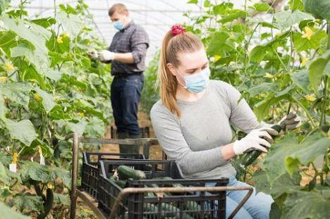 El aumento de la renta agraria en Almería genera más empleo