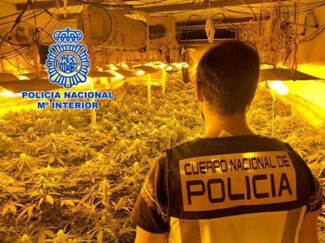 Cinco detenidos por tener dos viviendas dedicadas al cultivo de marihuana