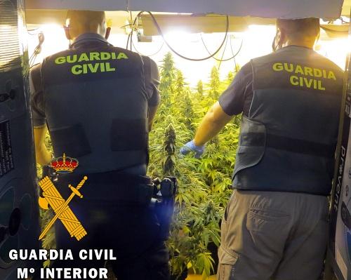 Localizada una plantación de marihuana por saltarse el confinamiento