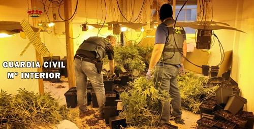 Desmantelan una plantación de marihuana en una casa okupada de Roquetas