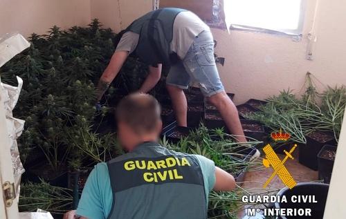 Acuden a extinguir el fuego en una vivienda de Roquetas... y encuentran una plantación de marihuana