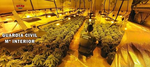Intervienen 297 plantas de marihuana en la misma vivienda que en 2018 incautaron 500