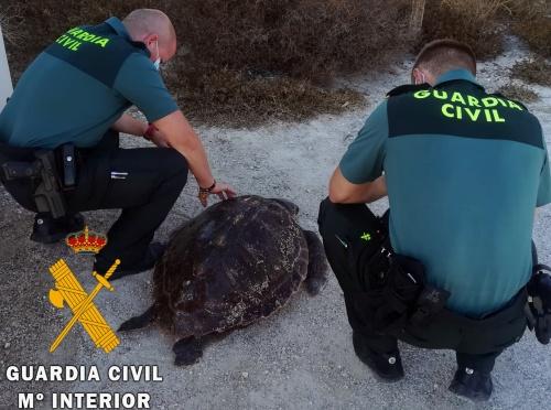 Recuperadas una tortuga Boba y otra Mora en Carboneras