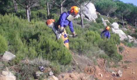 13,2 millones de euros para la mejora de caminos forestales