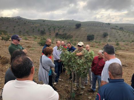Almería cuenta con aproximadamente 90 hectáreas de pistachero