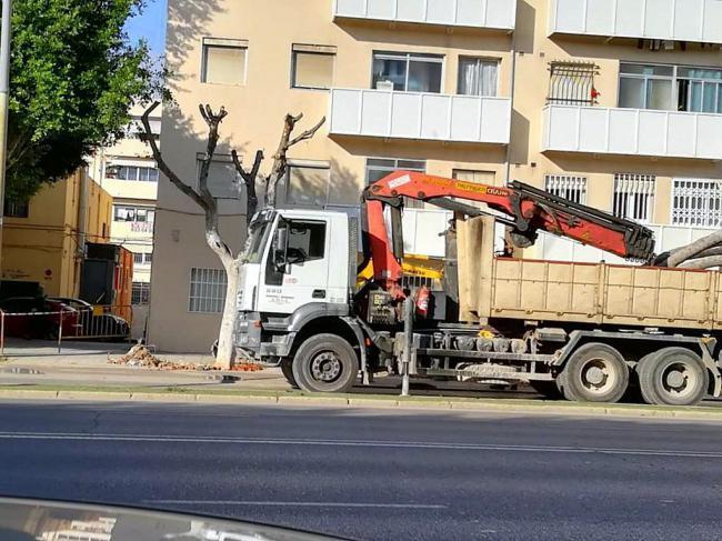 El PSOE pide al PP explicaciones por la eliminación de árboles en la Avenida del Mediterráneo