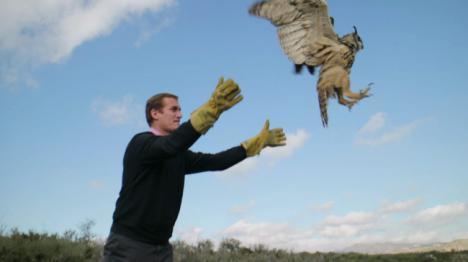 Medio Ambiente libera dos ejemplares de búho real en Níjar y Sorbas