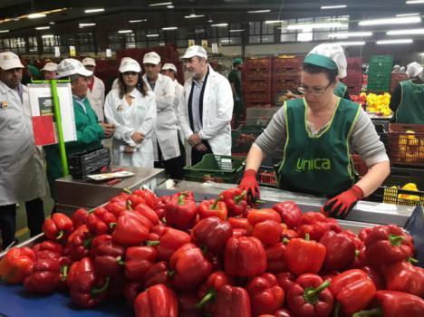 La secretaria general de Fondos Europeos Agrarios visita varias empresas hortofrutícolas de Almería