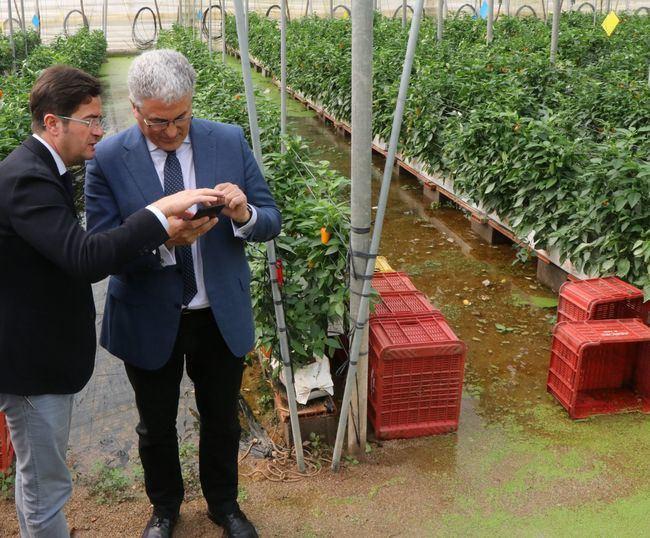 El alcalde y la Junta visitan los invernaderos de la Cañada de Onáyar