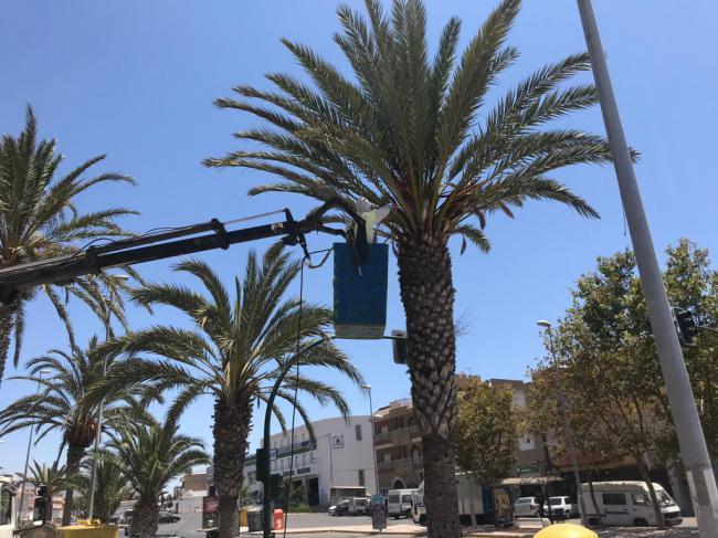 Campaña de prevención del picudo rojo en las palmeras de Adra