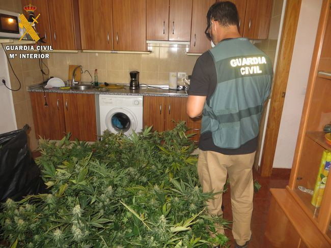 Unos encapuchados le asaltan en su plantación de marihuana y acaba detenido