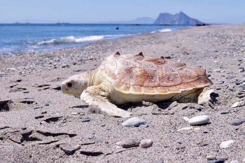 La Junta liberó 10 tortugas marinas en 2019 tras su recuperación física