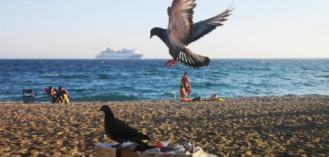 Ocho servicios de ferri entre Almería y Melilla hasta el 5 de julio