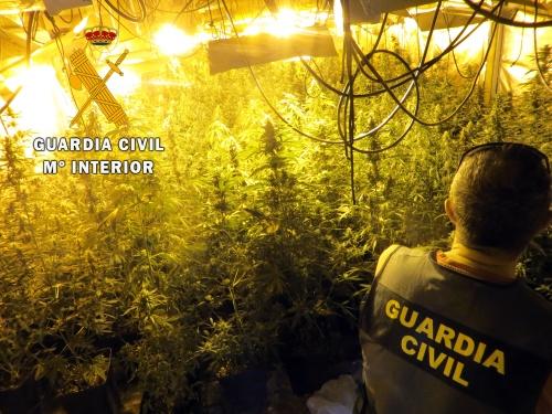 400 plantas de marihuana en un cortijo 'sellado' en Berja