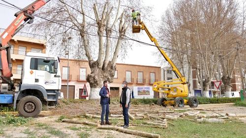 Ayuntamiento de Adra poda los árboles de la N-340