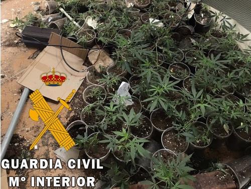 Llama a la Guardia Civil porque le están robando en su plantación de droga