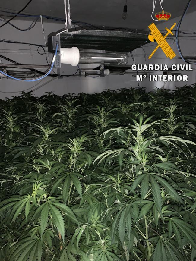 """La Guardia Civil haya en dos viviendas un cultivo """"in door"""" de marihuana en Gádor"""