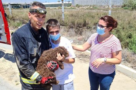 Los Bomberos rescatan a un cachorro de perro de agua de un imbornal en La Cañada