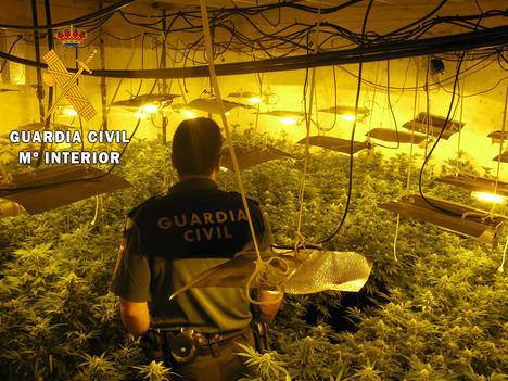 La Guardia Civil localiza más de mil plantas de marihuana en dos actuaciones diferentes en Vicar