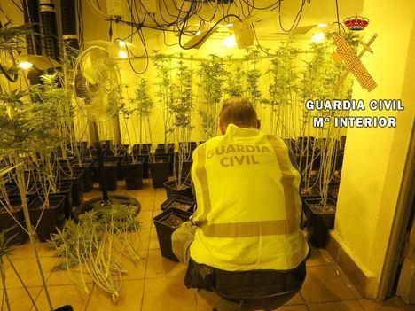 Incautadas 24.000 plantas de marihuana en Níjar