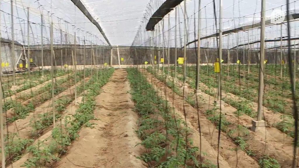 447 agricultores reciben 360.000 euros en ayudas agroambientales a invernaderos