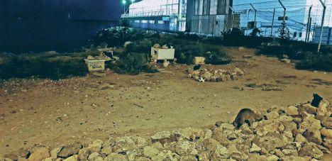 Cs Almería exige que la Ordenanza Municipal de Animales contemple el método CES