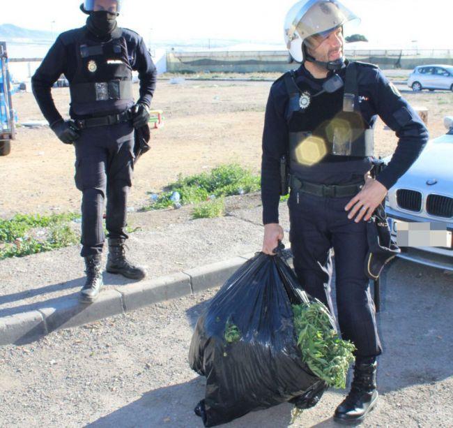 Tres detenidos por una plantación de marihuana en una vivienda de El Ejido