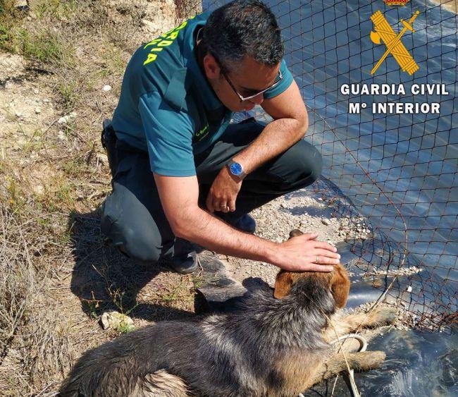 La Guardia Civil rescata a un perro atrapado en el interior de una balsa de riego
