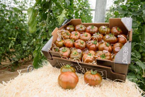 Agricultura mejorará la gestión de las denominaciones de calidad de Andalucía