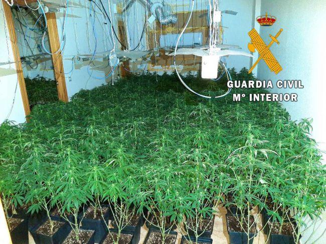 42 detenidos en lo que va de año por plantaciones de marihuana