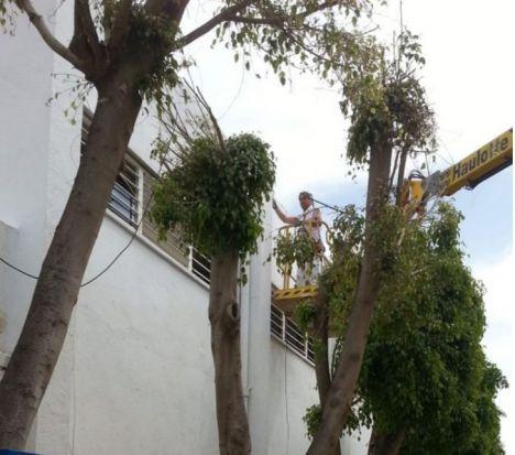 El Ayuntamiento refuerza el mantenimiento en los centros educativos ejidense