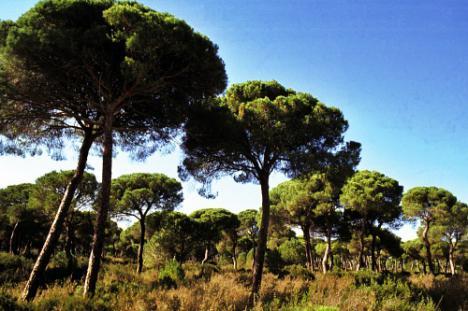 La Junta programa una plantación masiva por el Día de Andalucía