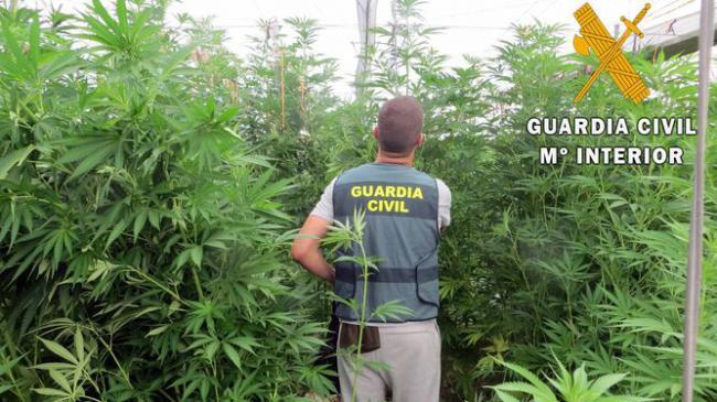 Planta un kilómetro cuadrado que no es de su propiedad con marihuana en El Ejido