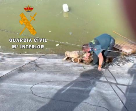 La Guardia Civil auxilia a un perro a punto de ahogarse en una balsa de riego en Vícar