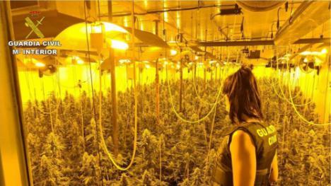 Intervenidas 295 plantas de marihuana y una persona detenida en Matagorda