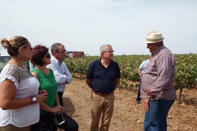 La vendimia en Almería producirá un 20% más