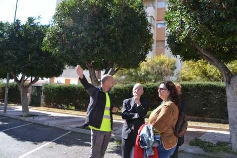 Nuevo protocolo de podas en Roquetas que previene las plagas