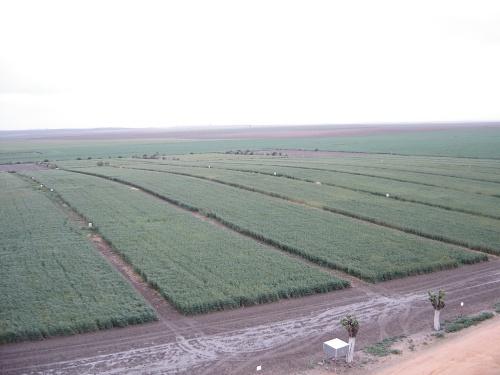 Agricultura investiga la salud del suelo con el objetivo de mejorarla