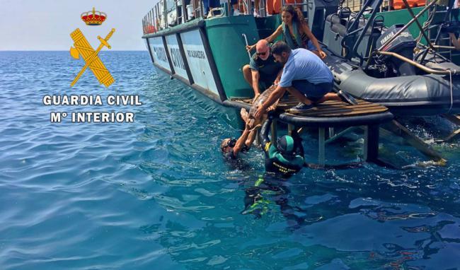 "La Guardia Civil realiza junto a Equinac la suelta de la tortuga boba ""Escorial"""