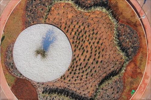 Un olivo centenario y taráis para el acceso sur de Roquetas de Mar