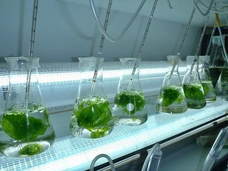 La UAL y el Instituto de Oceanografía desarrollan piensos a base de algas y probióticos