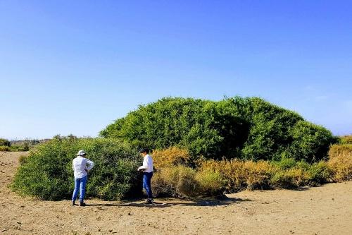 La UAL participa en una investigación sobre cambio climático en ecosistemas áridos