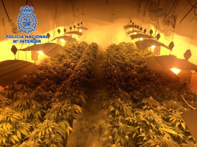 Desmanteladas dos plantaciones de marihuana ocultas en un sótano y un aljibe subterráneo
