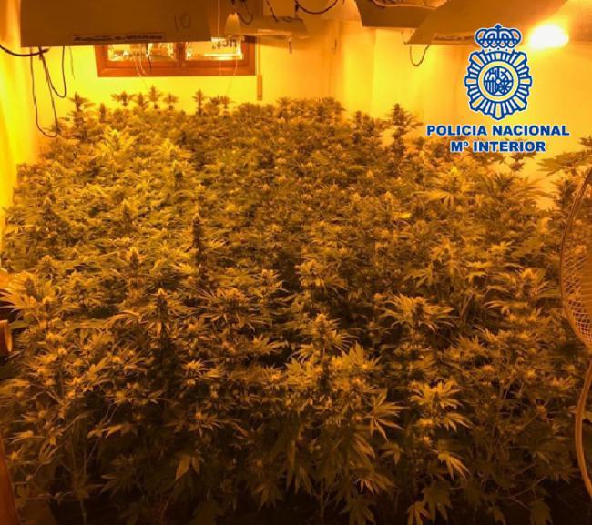 El dormitorio en el salón y en el resto de la casa... marihuana