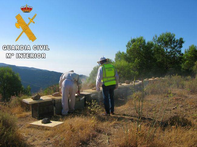 La Guardia Civil localiza e investiga al autor de la sustracción de 55 colmenas