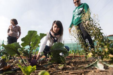 Agricultura ecológica en huertos urbanos para superar adicciones