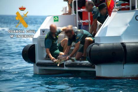 La Guardia Civil realiza junto a Equinac la suelta de dos tortugas bobas