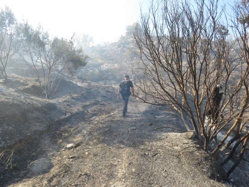Denunciada una persona por el incendio de Sierra Cabrera